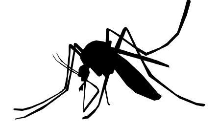 本港蚊患大爆發 如何防蚊自救?!